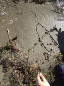 Strand, vann og barn - slår aldri feil!