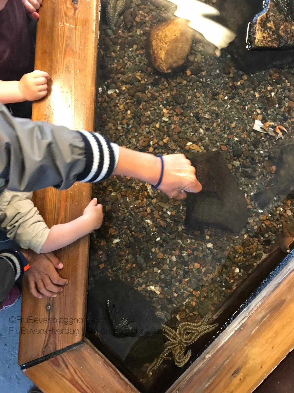 Drøbak akvariet // sjølivet er spennende!