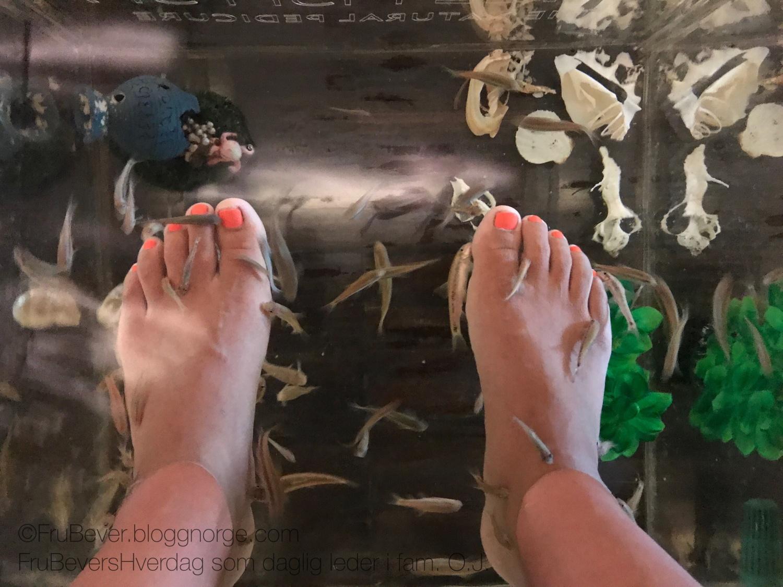 Fish pedicure Strømstad spa, fiske pedicure naturlig pedicure