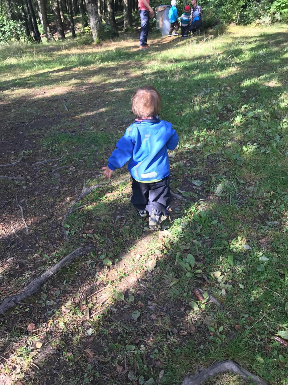 Frubevershverdag skogstur wisteria Lane bål kos, naboer, venner pølser