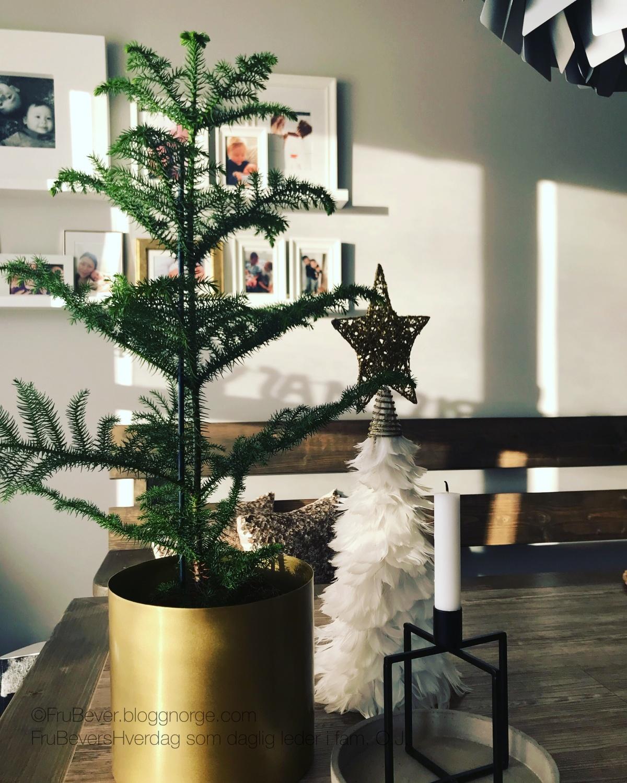Stuegran - trenger jeg juletre da? Jul @ Frubevershverdag