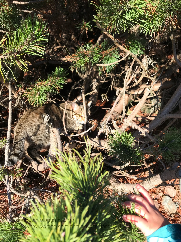 Visste du at det finnes Tiger i Norge? Naboen var har en ...