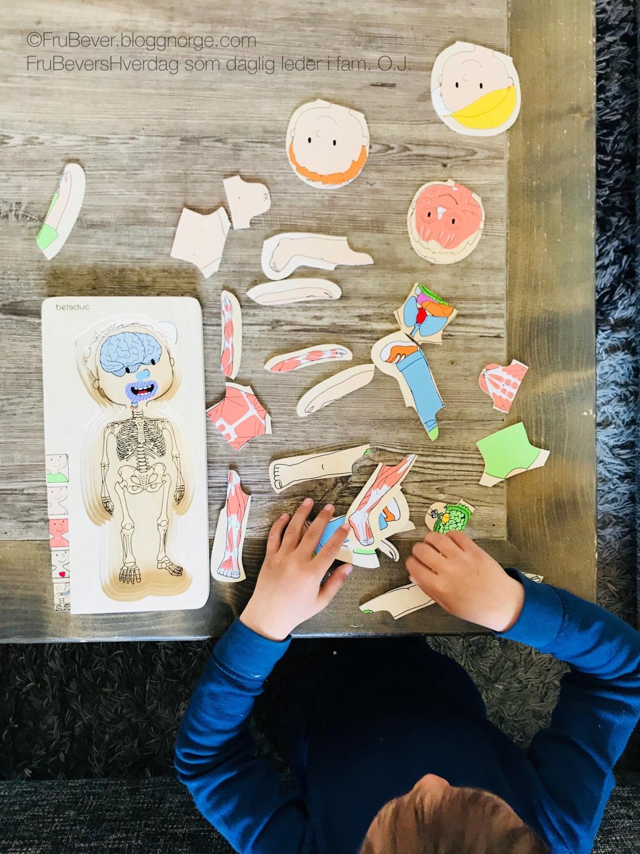 Lekeakademiet puslespill lek og lær om kroppen