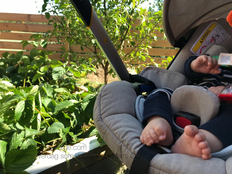 Hjemmelaget syltetøy med bær fra hagen! Mer kortreist blir det ikke