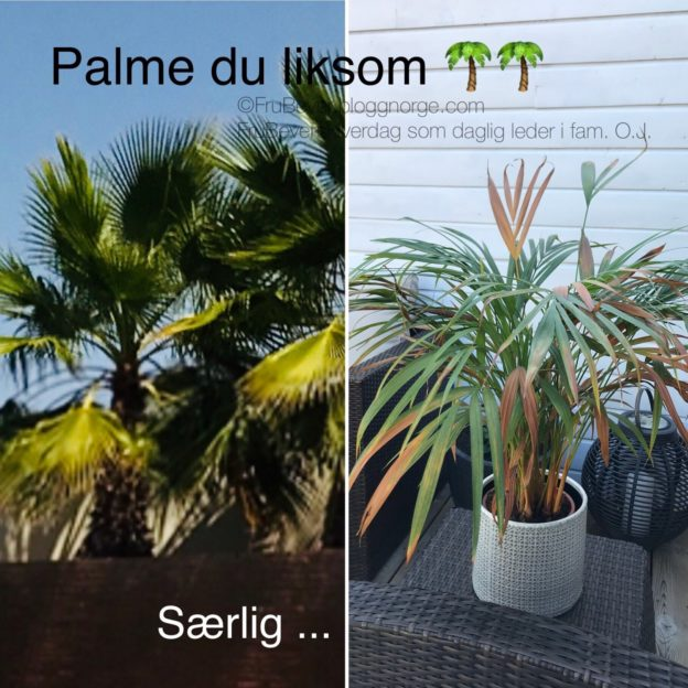 Palmesus 🌴 palme love sommer @ FruBeversHverdag