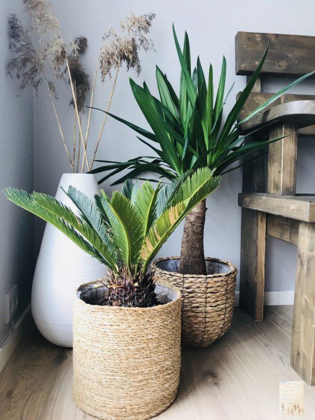 Grønne planter // palmer // sommerfeeling