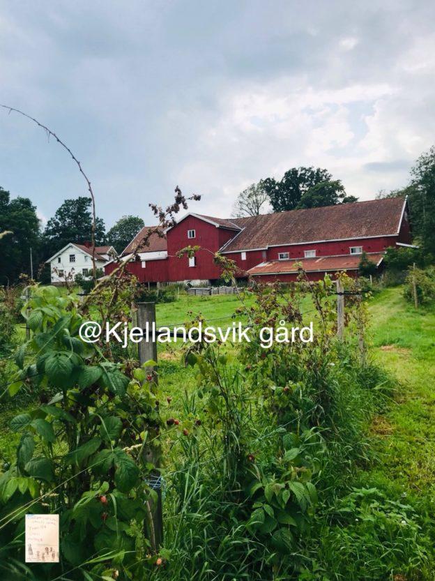 @kjellandsvik gård // selvplukk bringebær Moss // aktivitet å gjør med barn // sommer