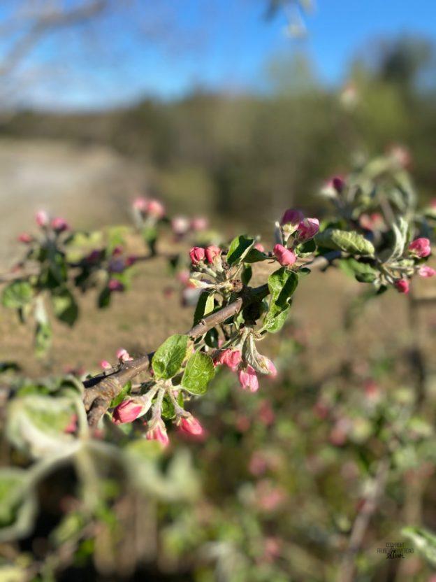 Det spirer og gror 🌱 [frukt og bærhagen FruBeversHverdag]