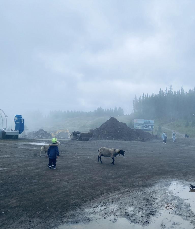 Sauekjøtt på fjellet 🐑 [FruBeversHverdag]
