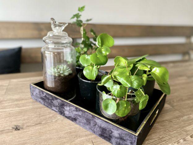 DIY terrarium 🌱 [FruBeversHverdag]