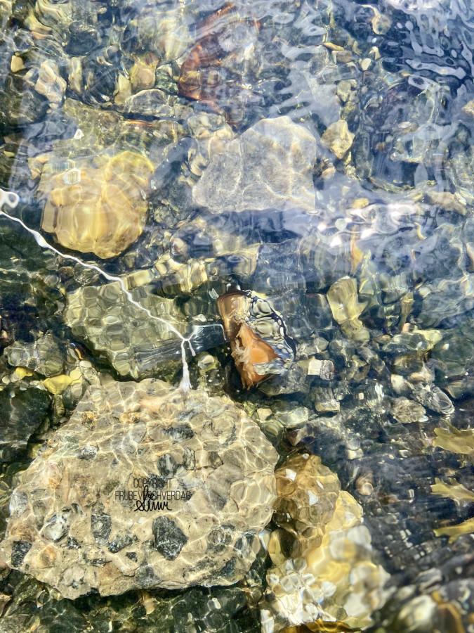 Strandliv, krabber og blå maneter 💦 [FruBeversHverdag]